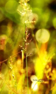مجموعه صور مناظر طبيعيه روعه لجوالات للاندرويد
