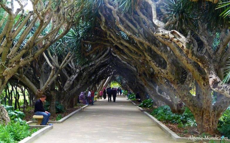 من اجمل حدائق العالم .. 227484458.jpg