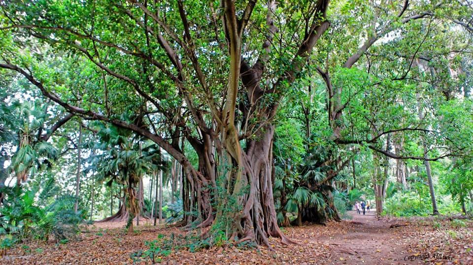 من اجمل حدائق العالم .. 934421810.jpg