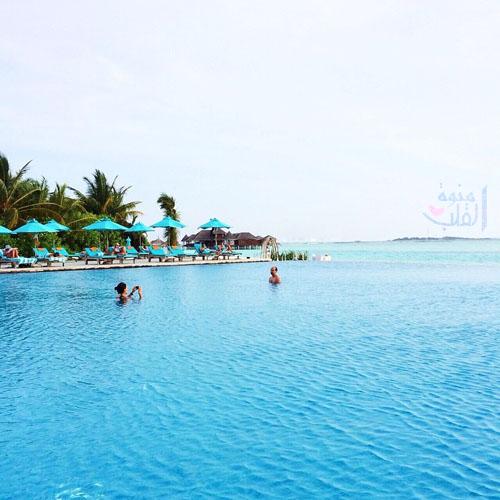 المالديف وسافر تـود وحـال دونـه