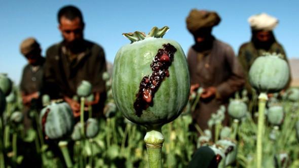 إنتاج الأفيون في أفغانستان يسجل رقما قياسيا خلال العام  2017