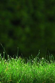خلفيات طبيعية كيوت للاندرويد