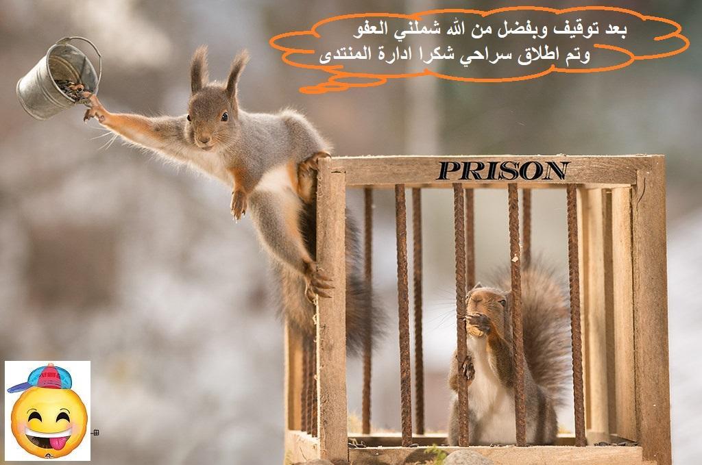رد: محبين سهم الجزيره ريت تعالو شوي